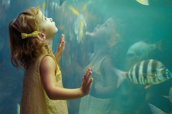 Child looking into aquarium - American Express