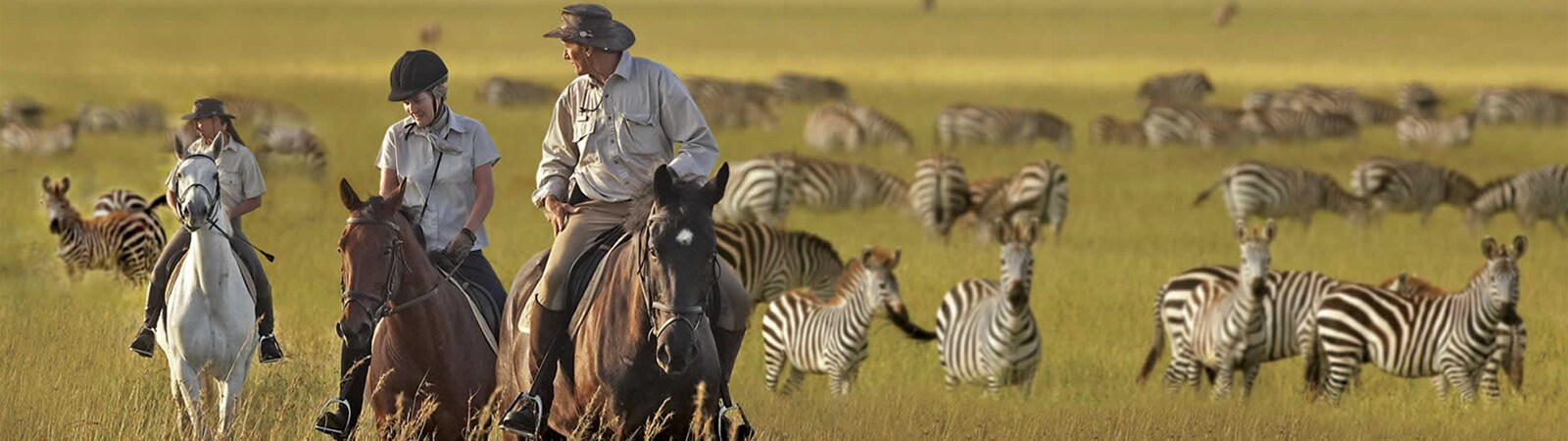 Image of 3 men and women riding horses surrounded by zebra