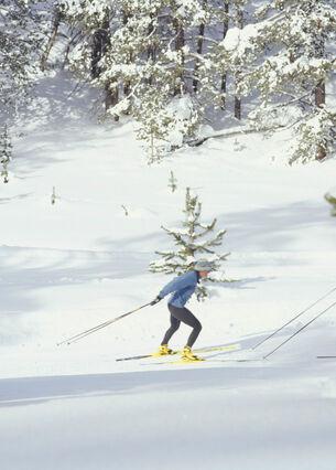 Zwei Personen fahren auf Langlaufskiern in einem Waldgebiet.